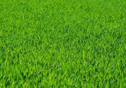Få hurtigt en flot grøn plæne foran virksomheden